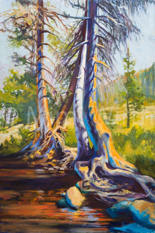 THE OLD TREE AT ECHO LAKE